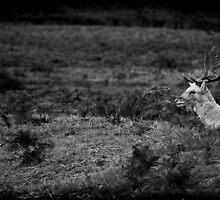 Richmond Park Fallow Deer by FakeFate