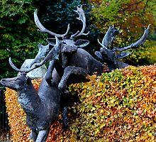 Anyone seen Rudolf? by dgscotland