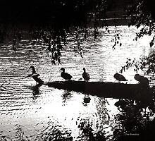 Ducks in a Row by © Joe  Beasley IPA