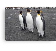 "King Penguins ~ ""On Parade"" Canvas Print"