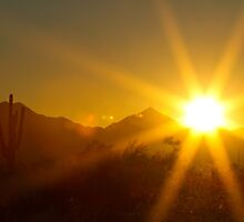 Arizona Sun by Bo Insogna