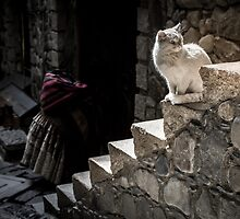 White Cat sitting on Steps by thirdiphoto