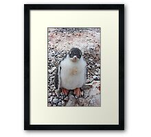 """Gentoo Penguin Chick ~ """"My life's goal....to grow into my feet!"""" Framed Print"""