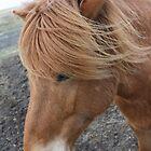Brown Icelandic Horse by Englund