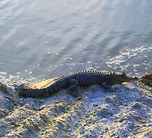 FLORIDA GATOR by nikki024