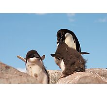 """Adelie Penguin and chicks ~ """"and WHEN do I get fed!!"""" Photographic Print"""