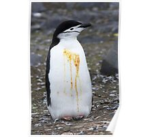 """Chinstrap Penguin ~ """"Who Flung Dung?"""" Poster"""
