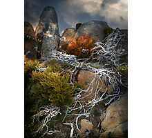 roots Photographic Print