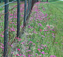 Barbed Wire and Wildflowers by Stacey Lynn Payne