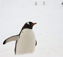 "Gentoo Penguin ~ ""You Lost Too""  by Robert Elliott"