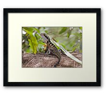 Eastern Water Dragon  Framed Print