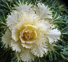 Beautiful.....But What Is It? by Gregory Ewanowich