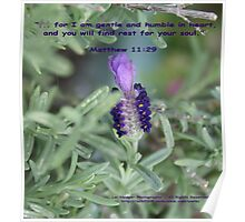 Lavendar ... Gentle ... Humble; God's promise for rest to our soul; In my spring garden, Spring 2010, La Mirada, CA USA Poster