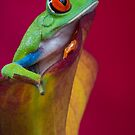 Just chillin out by Angi Wallace