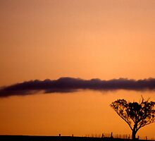 Tree, fence, cloud & sunset by FuriousEnnui