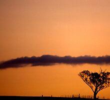 Tree, fence, cloud & sunset by FuriousEnnui