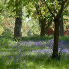 Dream Trees 3 by Alan Hawkins