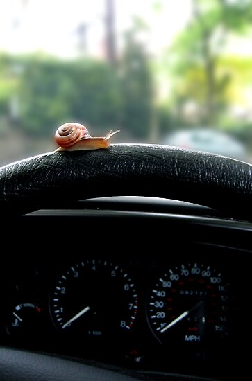 Driving in the slow lane by Adrian Richardson
