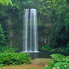 Millaa Millaa Falls, Queensland by Matt  Lauder