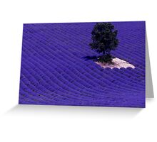 Lavender Fields of Provence Greeting Card