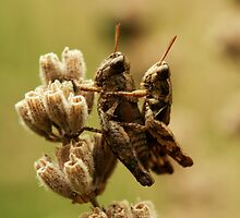 hopper love by italmacro