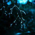 Delicate Beauty by Sherstin Schwartz