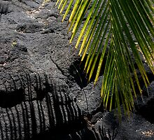Palm Leaf and Dried Lava by fourthwall