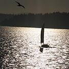Sailboat by fourthwall