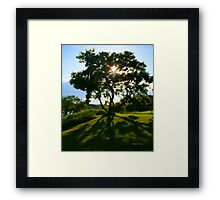 The Family Tree Framed Print
