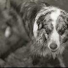 Dog 2 by jalexanderart