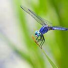 Dragonfly by Greg Riegler