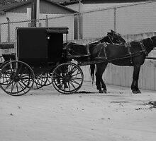 Another Horse And Carriage by Kathleen Struckle