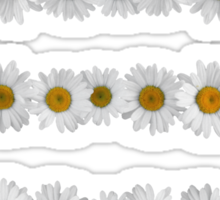 Daisy Chains on Navy Sticker