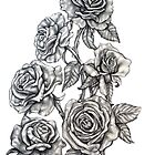 Roses in Pencil by Rachelle Dyer