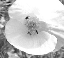 nectar sweet by tanyaivy