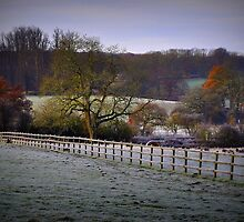 Frosty Field by Karen Martin