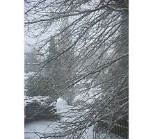 pinoaks winter blast Photographic Print