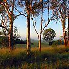 Dawn in the bush by Mel Brackstone