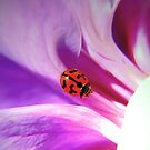 My ladybird by Basia McAuley