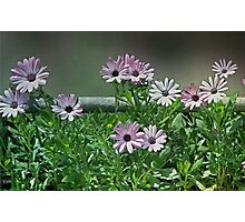 The Earth Laughs in Flowers... Photographic Print