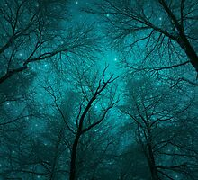 Simply Stare Upward (Dark Winter Sky / Winter Forest) by soaringanchor