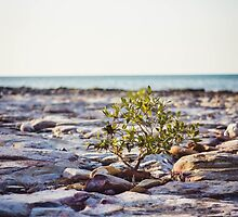 East Point Portrait by Candice84