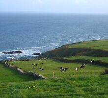 Ring of Kerry, Ireland by Katie76