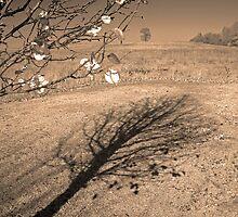 shadowtree by budrfli
