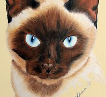 Siamese by Penny Edwardes