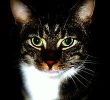 Cat by Ulf Buschmann