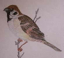 Eurasian Tree Sparrow by RLHall