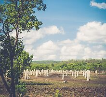 Termite Mounds by Candice84