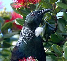 Tui by jamesm1