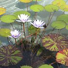 Water Lilies by Harriette Knight